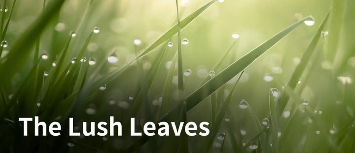 The Lush Leaves