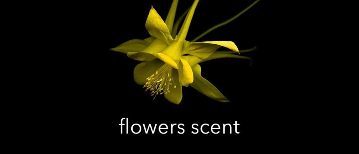 Flowers Scent